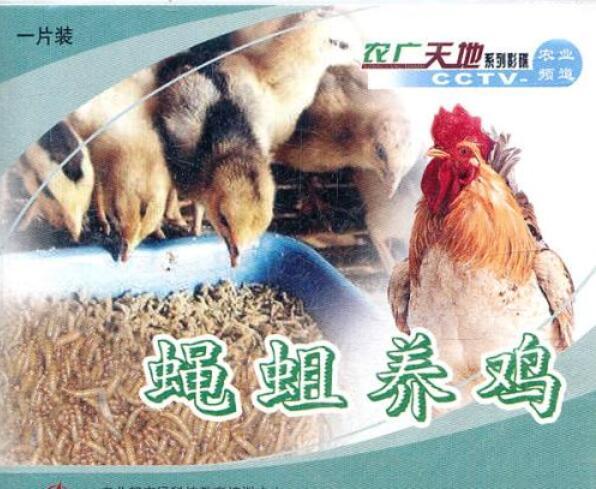 山林放养土鸡养殖技术散养鸡饲养柴鸡养殖蝇蛆养鸡10DVD光盘视频